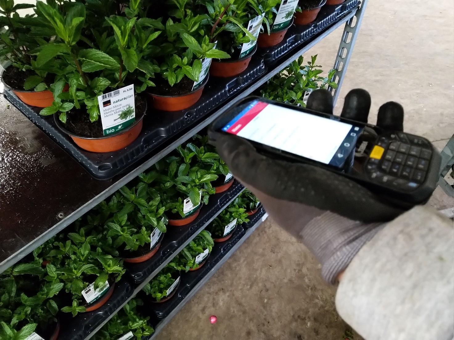 Zusammenarbeit mit der Bellaplant AG